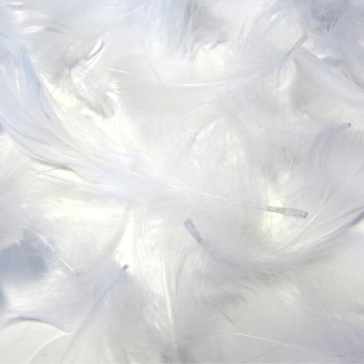 羽毛の種類